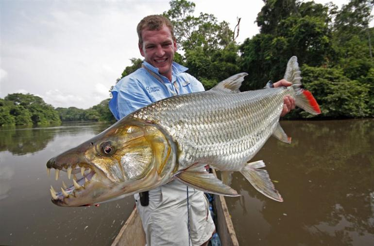 Goliath Tiger-fish