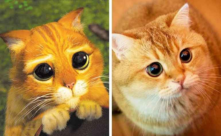 14-pic-of-animals-look-like-animated