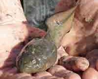 the-river-frog-tadpole