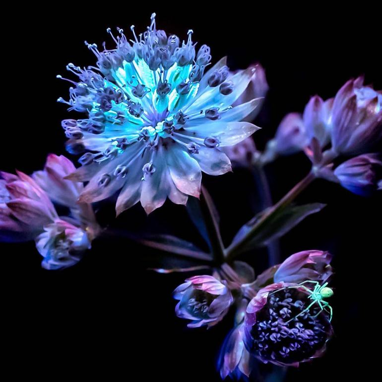 nature-in-the-spotlight-under-uv-lights