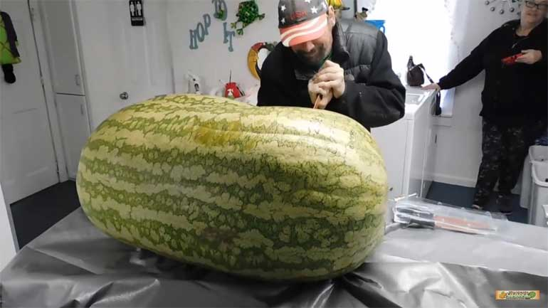 see-inside-giant-watermelon-288-lbs