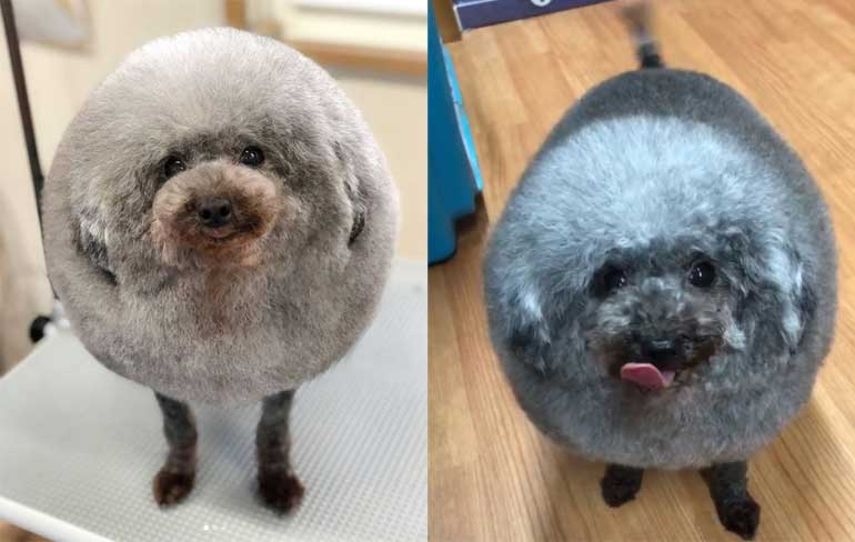 cloud-like-fluffy-dog