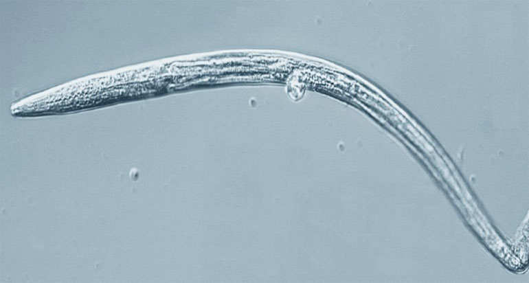 40-000-year-old-nematodes-revived-siberian-permafrost