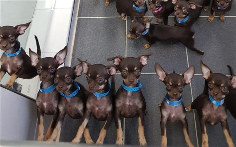 worlds-cloned-dog-miracle-milly-copied-record