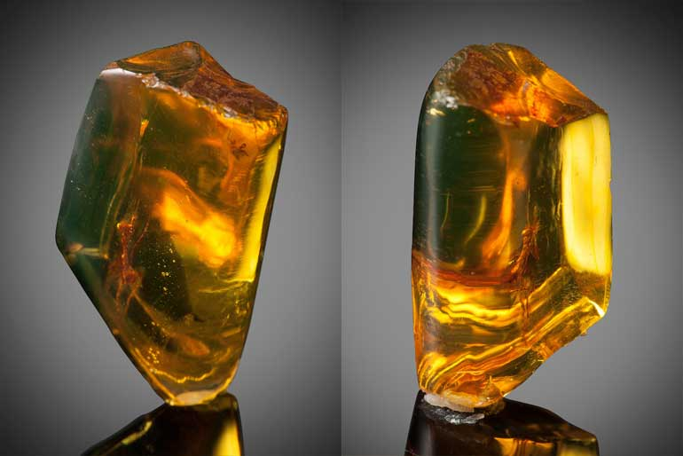 ancient-amber-mantis-fossil
