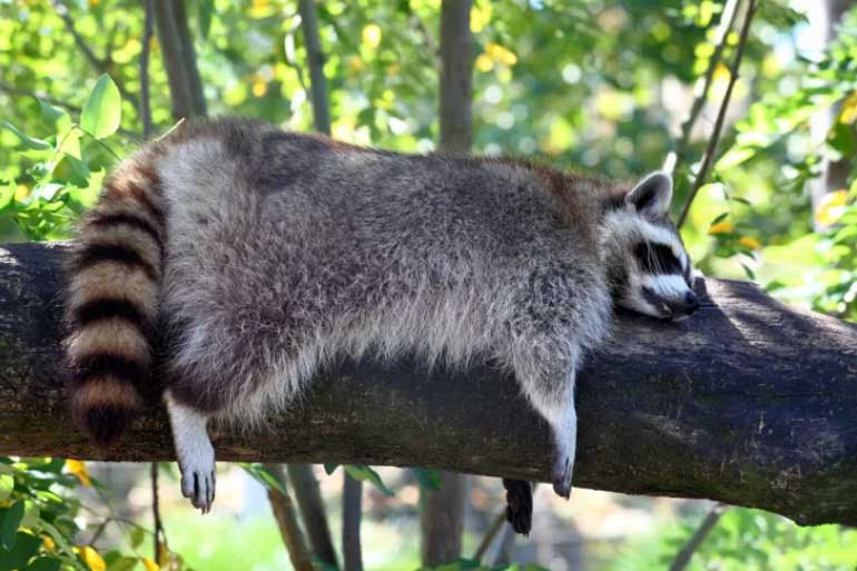 cute-animal-sleep