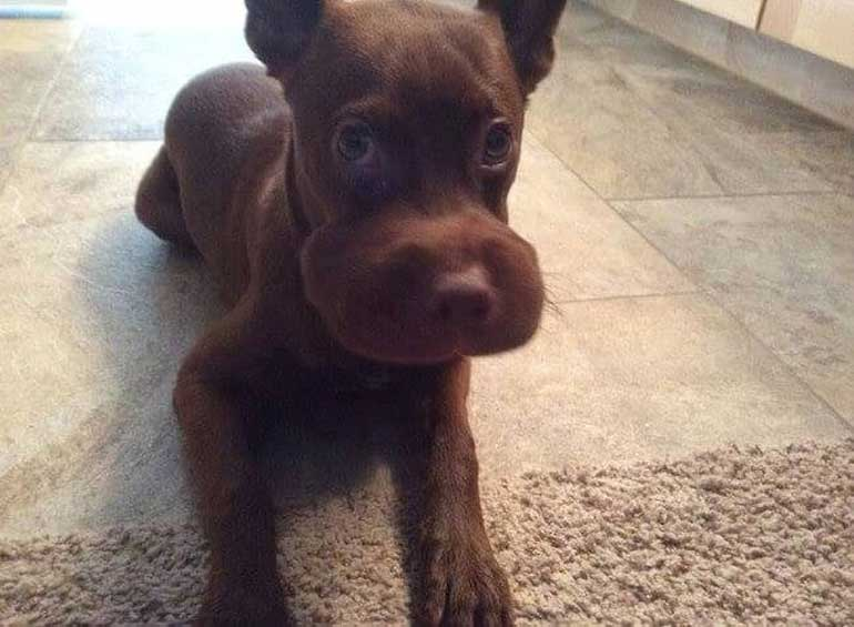 doggo-with-swollen-mouth