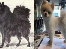 dog-breeds-changed