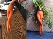 sexy-carrot