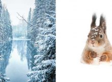 finland-forest-animals-photo