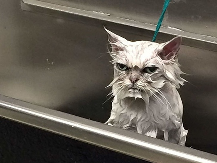angry-face-animals