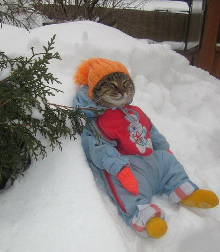 animals-who-will-melt-our-hearts-this-winter
