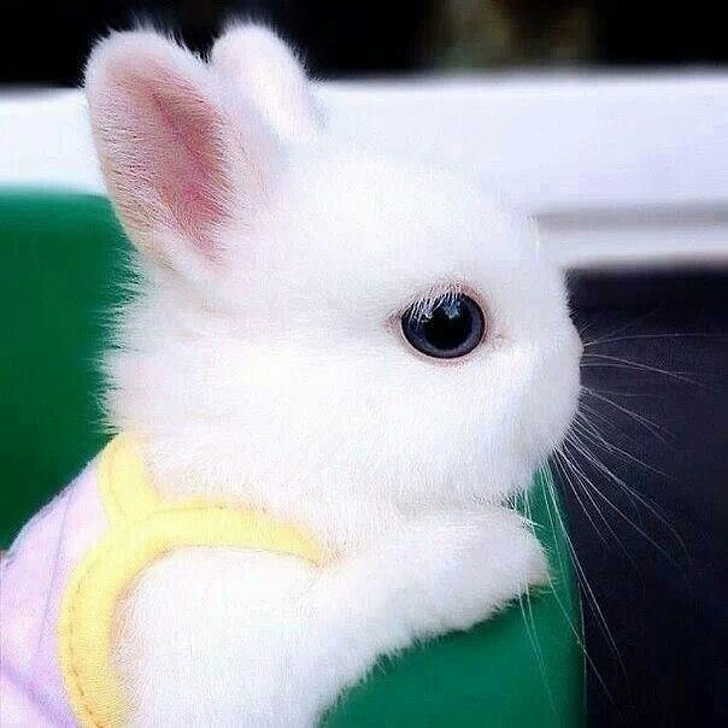 fluffy-adorably-tiny-rabbit