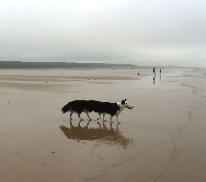 funny-panorama-animals