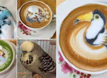 amazing-latte-art