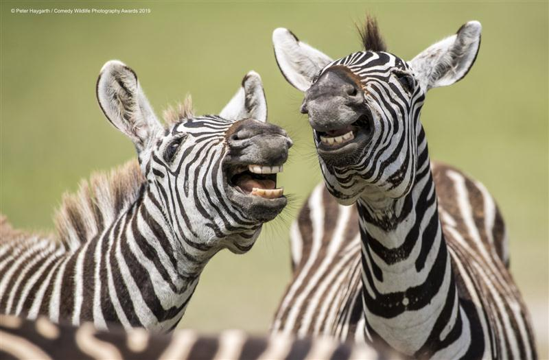 comedy-wildlife-photography-awards
