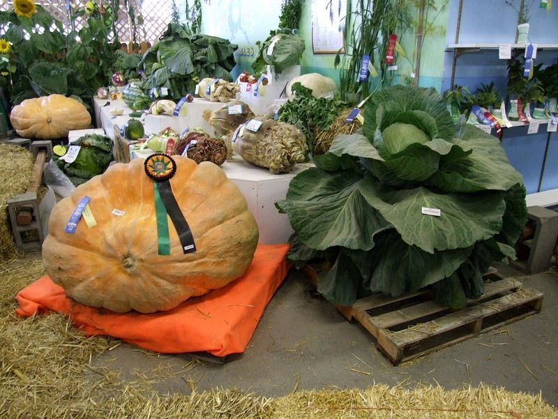 giant-vegetables-alaskas